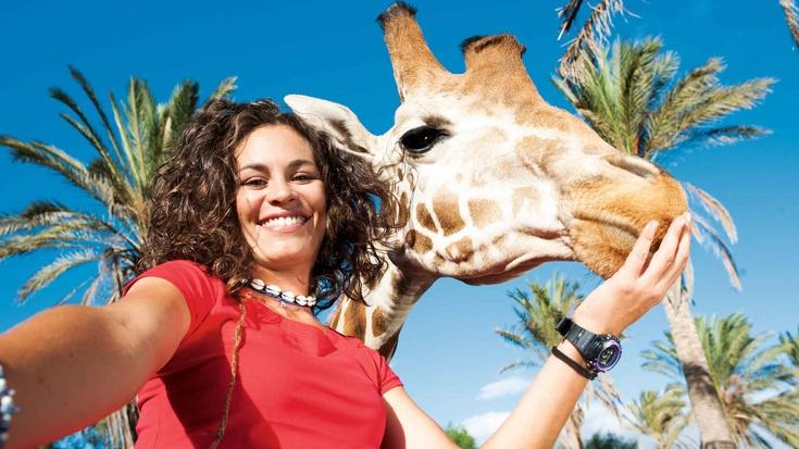 Actividades Oasis Park | Suite Atlantis Fuerteventura
