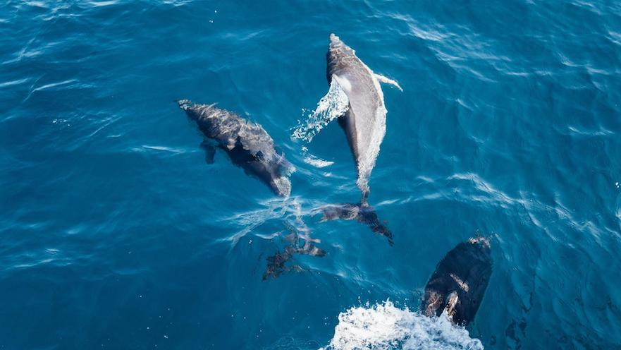 Cetacean watching excursion in Gran Canaria