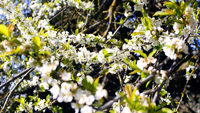 Gran Canaria, destino perfecto en primavera