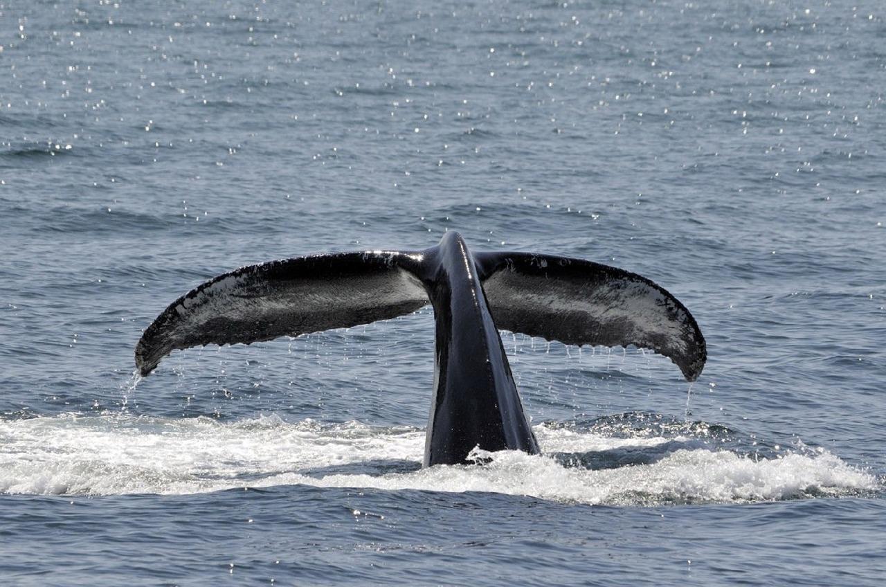 cetaceos en el archipielago canario