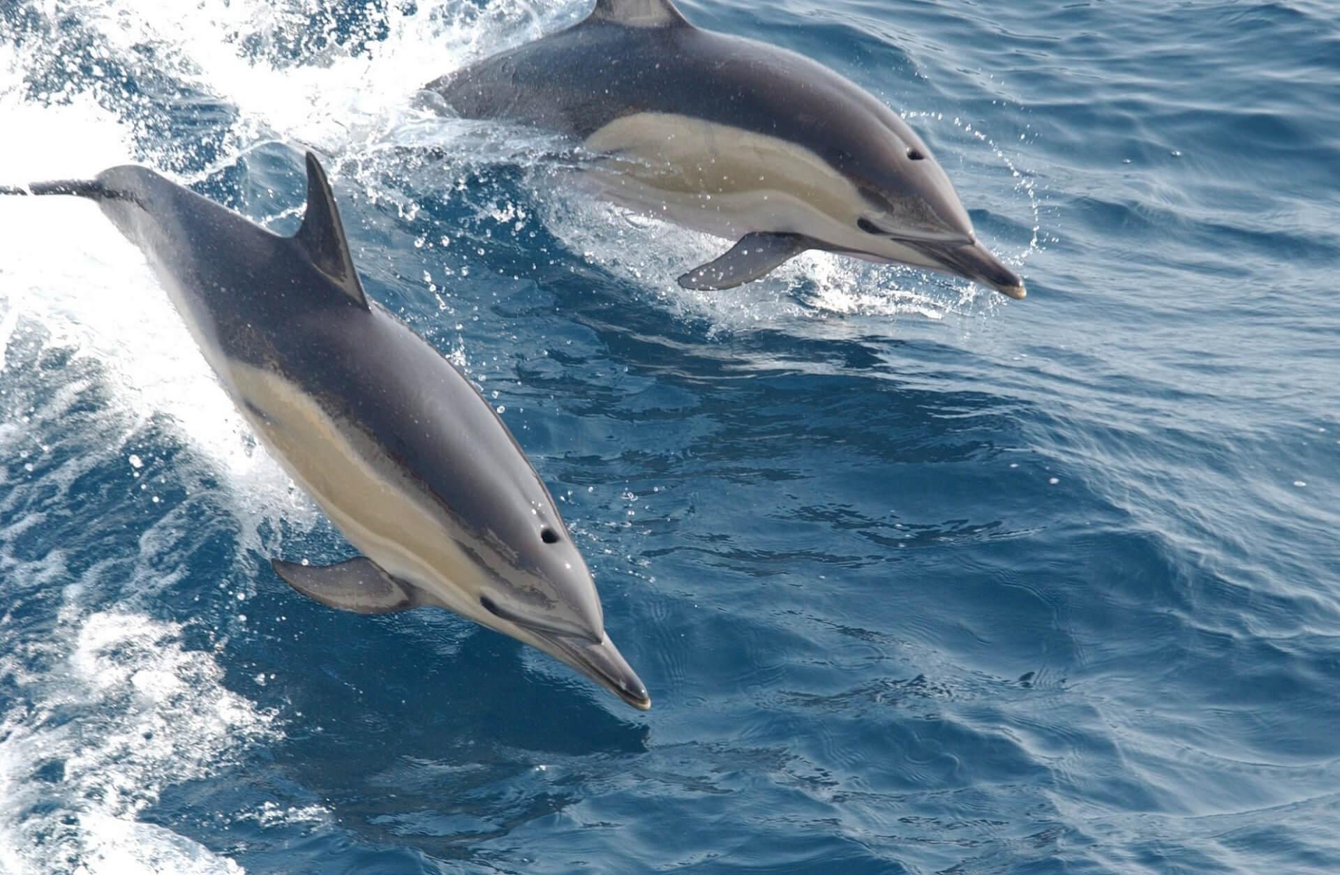 cetaceos en las islas canarias