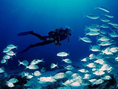 Actividades Fuerteventura - Buceo