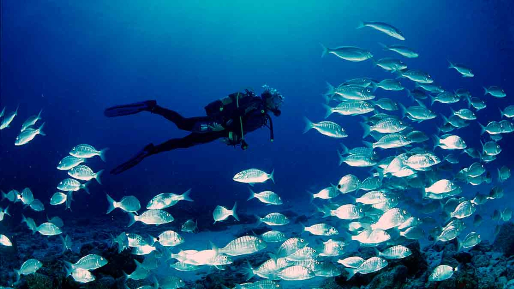 Actividades Corralejo Buceo Fuerteventura