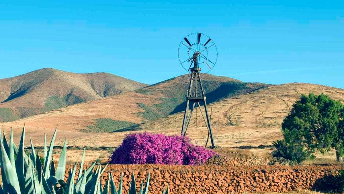 Molina Canario