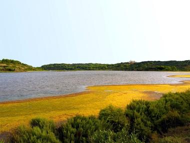 Fauna y vegetación | Menorca | Garden Hotels