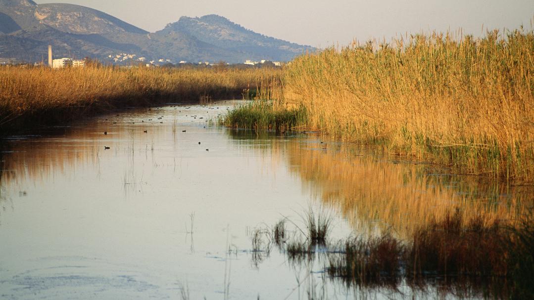 S'Albufera de Mallorca, el mayor humedal de Baleares