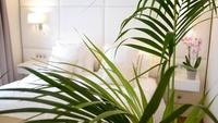 Junior Suite Premium - Detalle-1 | Atlantis Fuerteventura