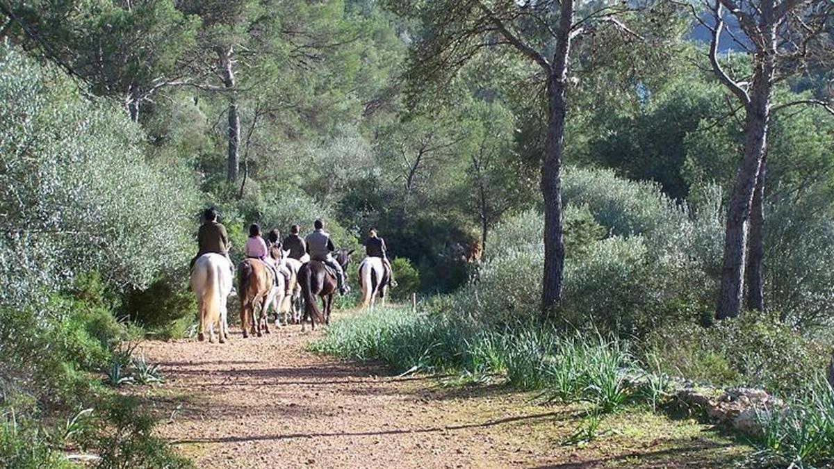 Excursión Caballo - Mallorca